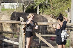 Ashley Benson and Vanessa Hudgens at Busch Gardens in Tampa Bay on March 3, 2012